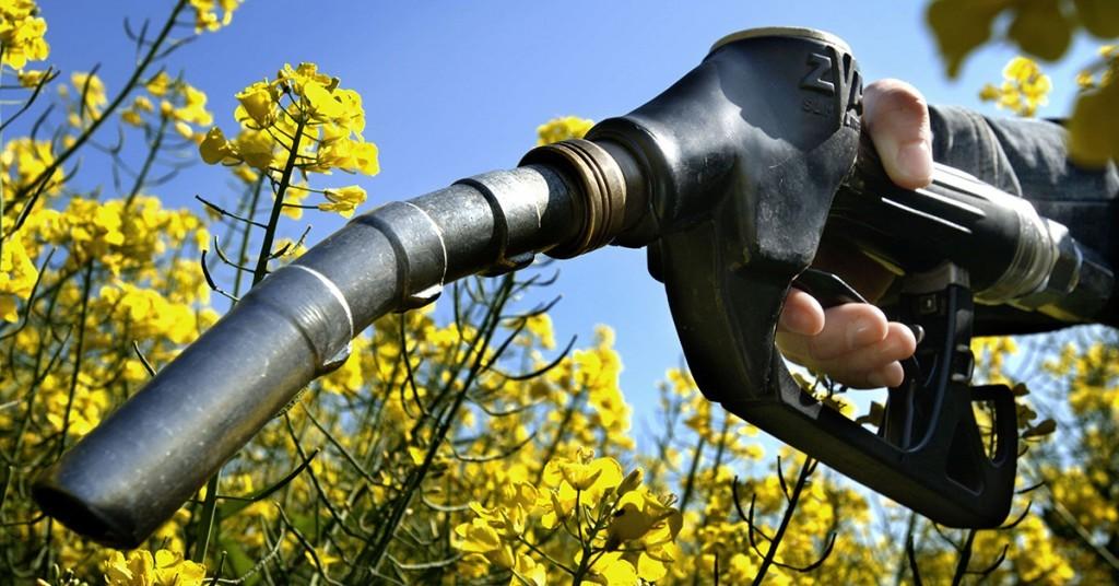Biocombustibles y el futuro