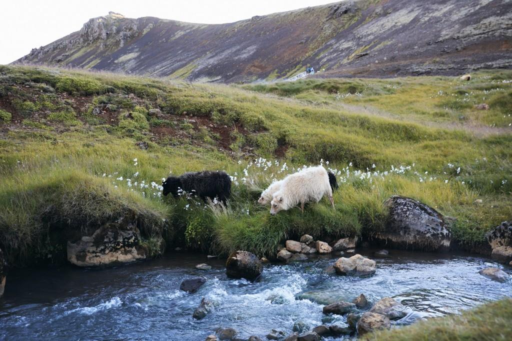 Naturaleza en Islandia